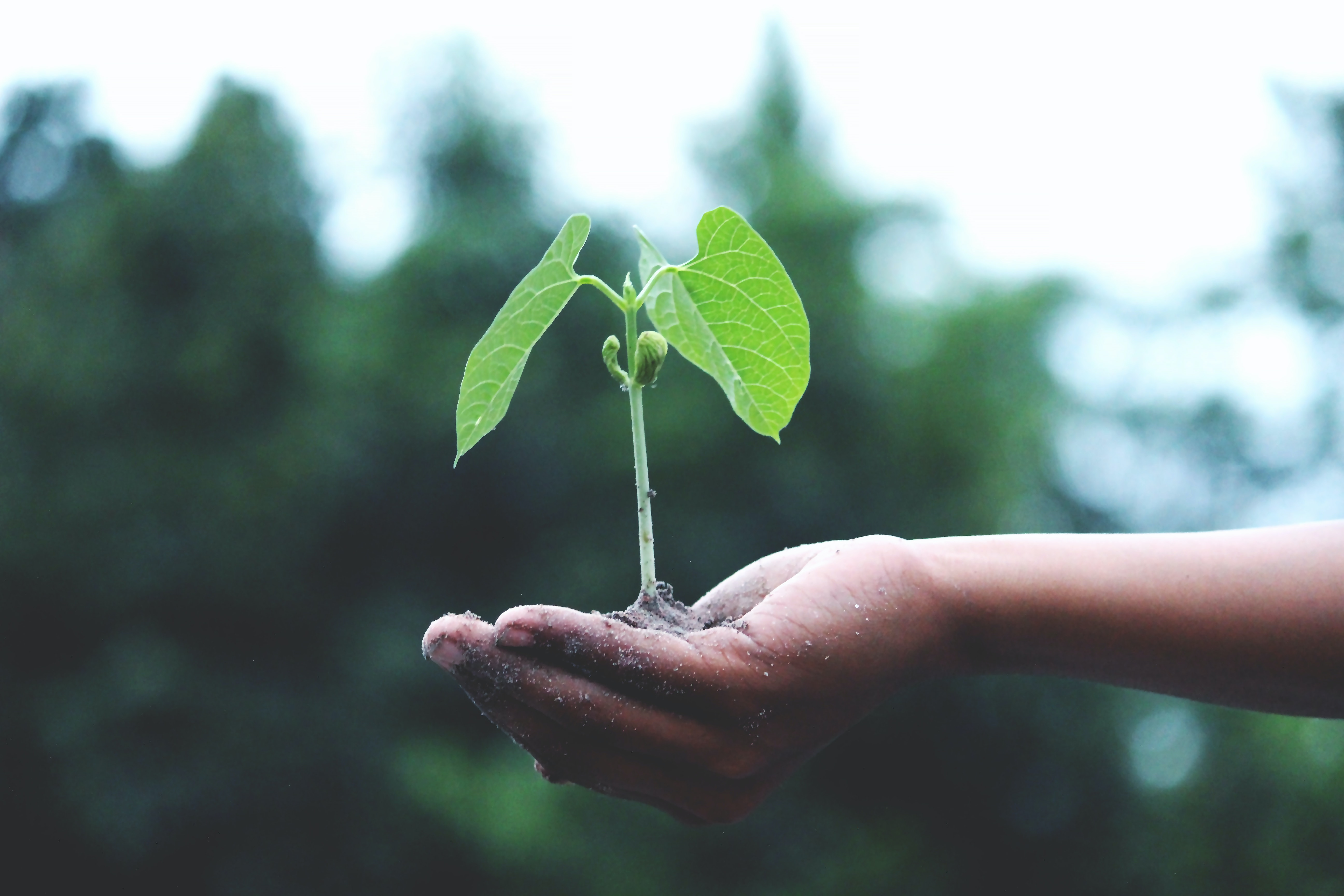 A small hand holds a small plant that has just began to grow